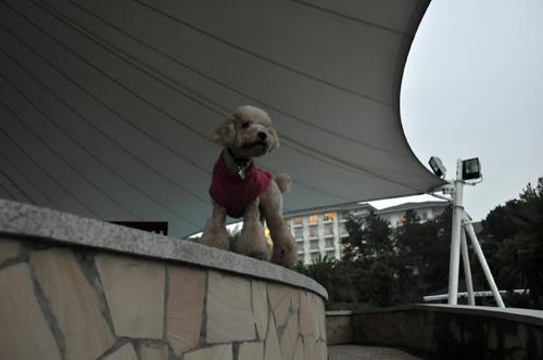 这次千岛湖之行,p意外的成为了入住5星的第一犬(宠物