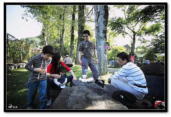 2010油桐花@牛耳石雕公園