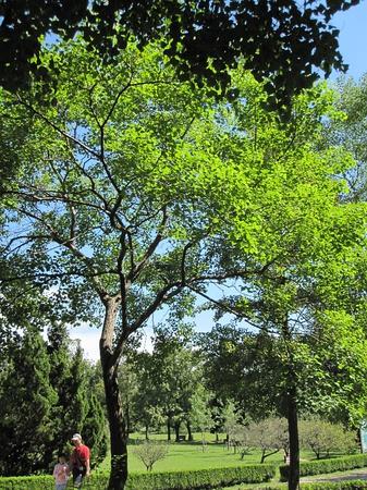 南方村头水边的乌桕树,由此往往作了乡村的标识.